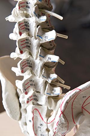 SMC Skelet